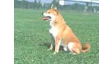 犬の体の特徴