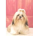 長毛の犬・短毛の犬の特徴
