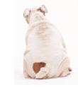 犬の便・尿のチェック