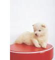 犬の幼児期の特徴
