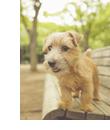 犬の緊張時のサイン