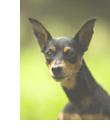 犬の警戒時のサイン