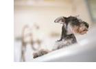 犬の事故:浴槽