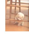 犬の事故:物をかじる