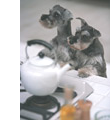 犬の事故:暖房器具