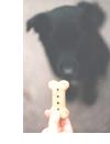 犬の食事の与え方
