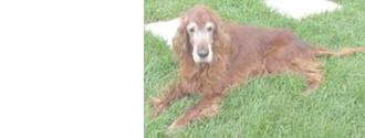 犬の高齢化のサイン