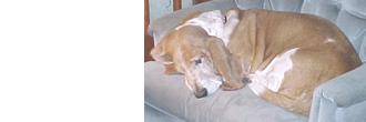 犬の主な病気