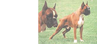 犬の体と習性