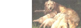 犬の妊娠と出産